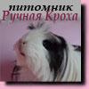 Ручная Кроха. Питомник морских свинок